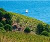 露喜龙 Roussillon: 法国南部的阳光产区