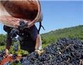 中国仍为南澳葡萄酒最大出口市场