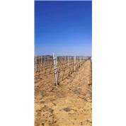 供应果树种植立柱葡萄架金属支架