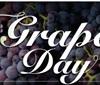 葡萄日历 您是那种葡萄?