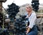 受春旱影响 俄罗斯2020年葡萄产量可能不会增长