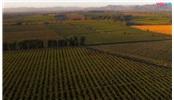 智利必游项目篇:体验葡萄酒文化