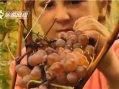 斯大林的出生地,传承7000年的葡萄酒