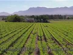 南非cronier葡萄酒庄园