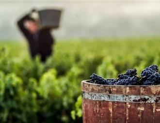 西班牙批準9千萬歐用于當前葡萄酒行業的特殊措施