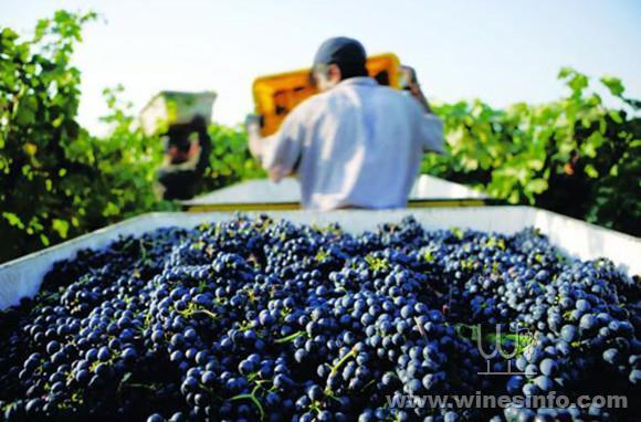 California-harvesting.jpg