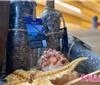 第二届海藏酒文化节即将启幕
