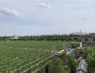全國葡萄酒旅游市場,寧夏賀蘭山東麓網絡熱度第一