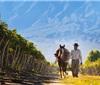 阿根廷拟加大葡萄酒拓展中国市场力度