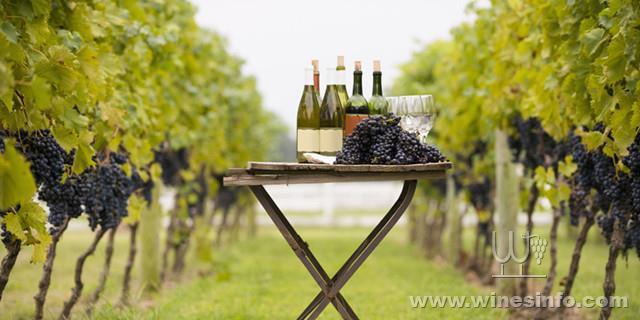 landscape_1425923843-hbz-wine-women-index.jpg