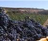 里奥哈2020年采收工作结束 收获超过4亿公斤葡萄
