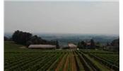 波尔多葡萄酒 甜白产区