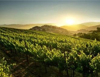 西班牙葡萄酒近十年获外商投资超8亿欧元