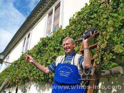 斯洛文尼亚为世界最古老葡萄树举行剪枝仪式