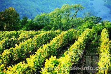 逃逸葡萄园:中国葡萄酒资讯网(www.winesinfo.com)