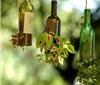 没有一颗树,会结葡萄酒