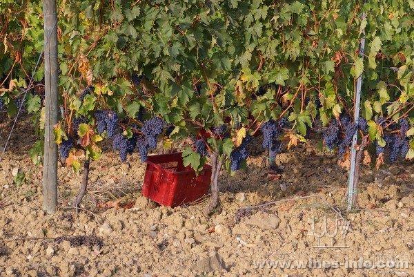 最全红葡萄酒酿造过程