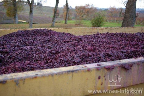 智利红酒批发,赤霞珠葡萄酒,智利进口红酒