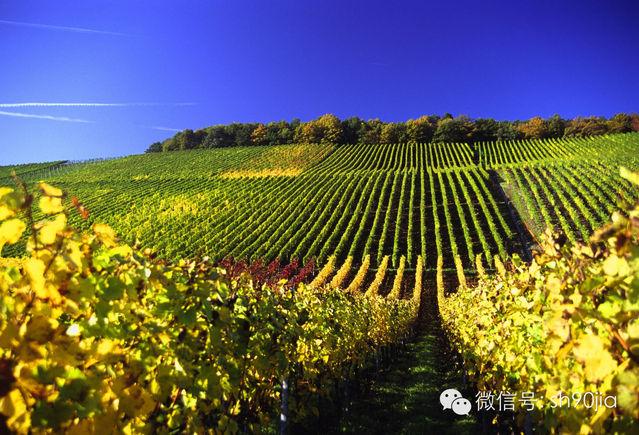 城市酒讯 上海市 酒讯  活动地点:上海上海市静安区西康路448号 活动