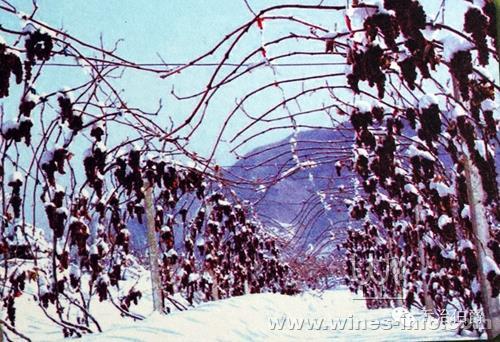 桓仁葡萄酒视频发展局在桓仁举办北京冰葡萄酒师说产业图片