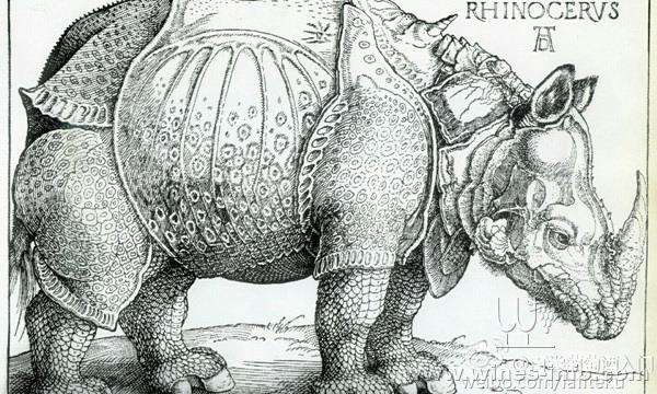 动物素描画犀牛