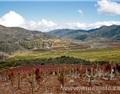 【名庄】永恒酒庄,智利最专业最具酿酒经验的酒庄之一