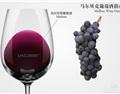 马尔贝克(Malbec)葡萄品种介绍