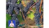 """戎子红酒:从深山沟到世界顶级葡萄酒市场的""""中国制造"""""""