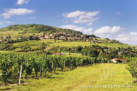 beaujolais-theize.jpg