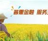 三农金融对乡村振兴和农业发展起到什么作用
