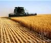 什么是三农经济,发展的重要作用是什么?